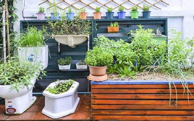 How To Homestead In The City