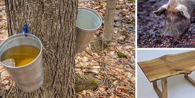 The 10 Best Trees For Homesteaders