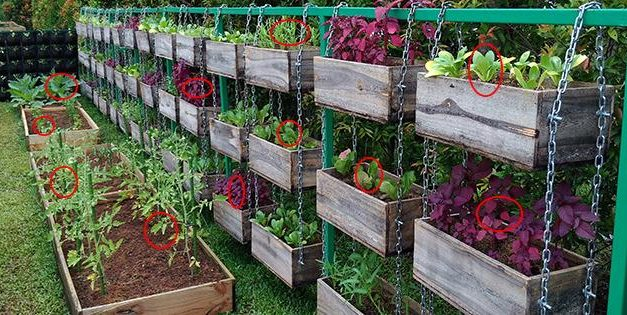 The Best Vegetables To Grow To Turn A Profit