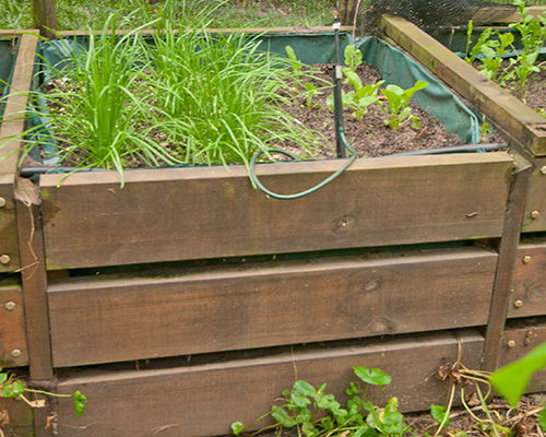 example of a raised bed