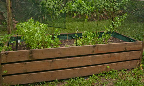 DIY Raised Beds For Your Backyard