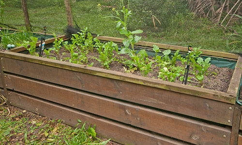irrigation system for the raised beds