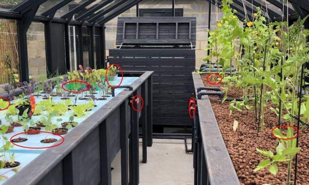DIY Year Round Self-Sustaining Garden
