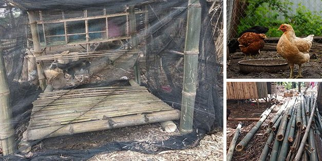 Build Your Chicken Coop With $50 In One Hour