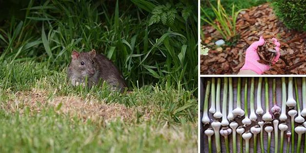 How You Can Keep Rodents Out Of Your Garden