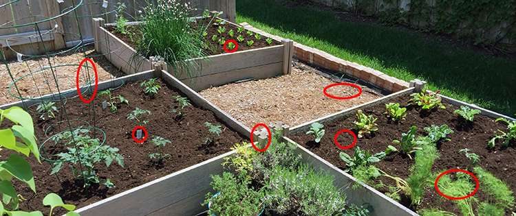 7 Common Raised Bed Mistakes Every Person Should Avoid