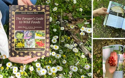 The Forager's Guide To Wild Foods: Book Review