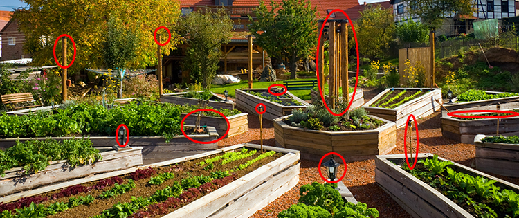 10 Ways to Sow Revolution in Your Backyard (and Why You MUST Go to Battle)