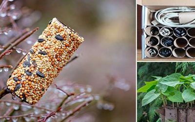 Ingenious Ways To Use Toilet Paper Rolls That You Never Thought Of