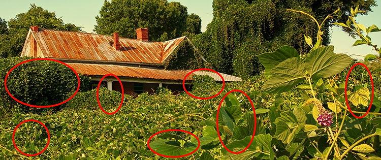 These Invasive Herbs Will Devastate Your Backyard
