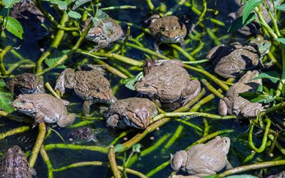 How To Attract Toads and Frogs to Your Garden (And Why You Should Do It)