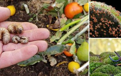 Most Threatening Insects You Should Keep Away From Your Garden