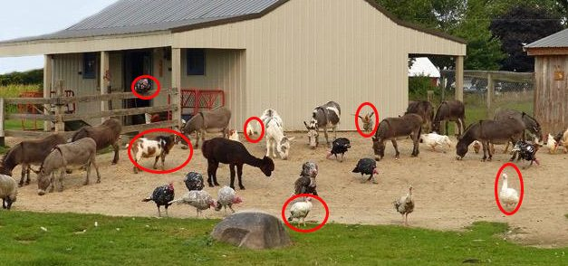Livestock Animals You Should Start Raising For The Upcoming Economic Crisis