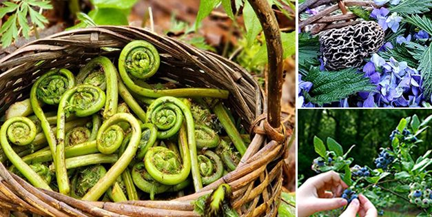 Wild Edibles You Should Forage This Fall