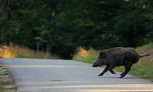 when you should eat a roadkill and when you should not