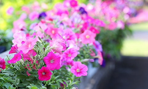 If You Have Pets, Get Rid Of These Plants Immediately