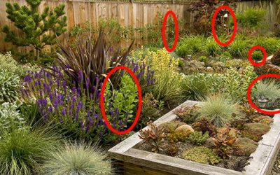 If You Have Pets, Get Rid Of These Plants Immediately!